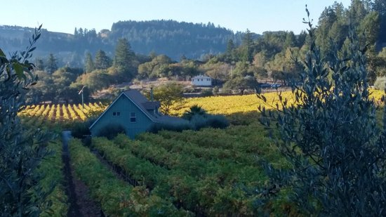 Chelsea Vineyards: view from our morning walk