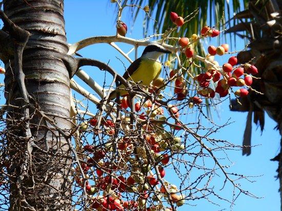 Grand Bahia Principe Coba: beautiful bird