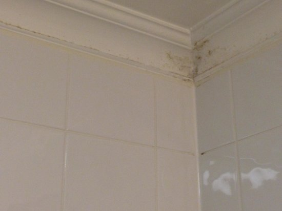 Etrop Grange : Mould In Bathroom