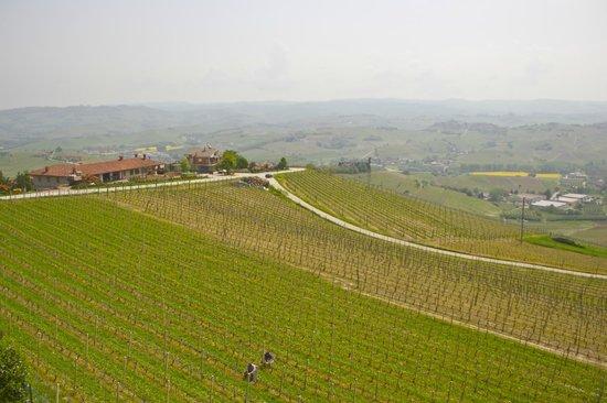Agriturismo Albachiara : Вид с балкона из номера