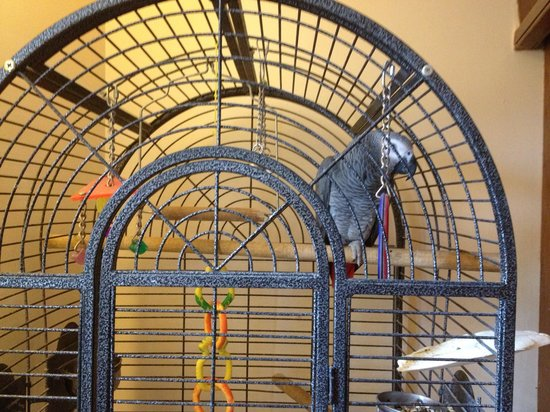 """Pear Tree Inn and Country Hotel: """"Joey"""" the resident parrot"""
