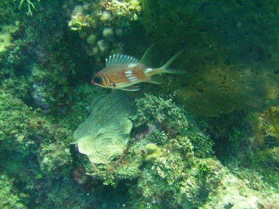 Franklyn D Resort & Spa: great dives