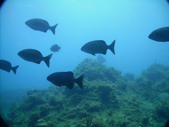 Franklyn D Resort & Spa: grgeat dives
