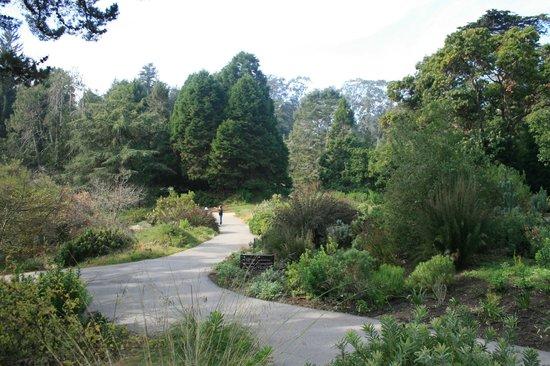 Botanical Garden Picture Of San Francisco Botanical Garden San Francisco Tripadvisor