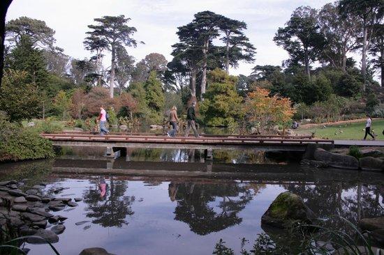 San Francisco Botanical Garden: pond at botanical garden