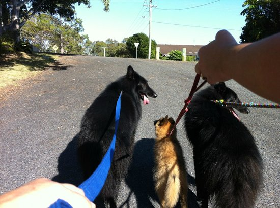 Safety Beach Ocean Bungalows: 5 minute walk to the beach - our 3 Belgian Shepherds loved it!
