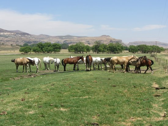 Moolmanshoek Private Game Reserve: Plenty of horses!