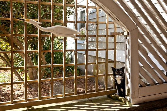 Abbey's Lantern Hill Inn: Blackie the cat