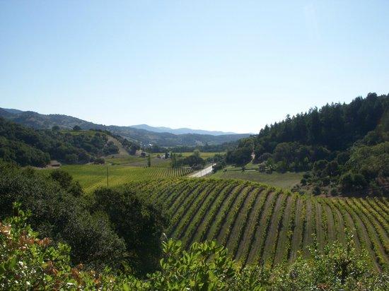 Silverado Vineyards: Parreiras.