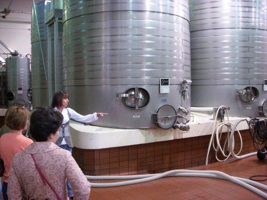 Silverado Vineyards: Visita à linha de produção.