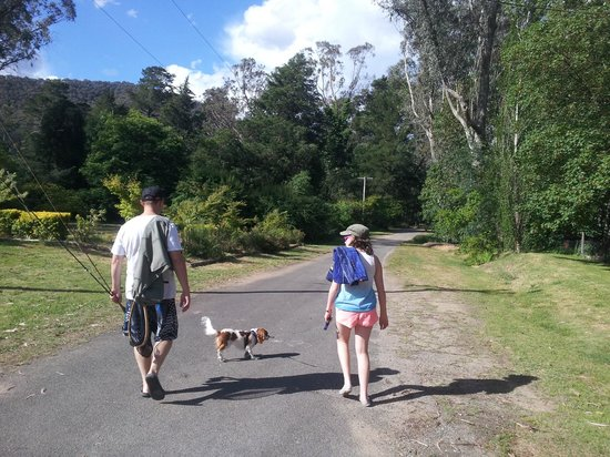 Tyntynder Lodge Garden Cottages: Walking the dog to the Ovens River.