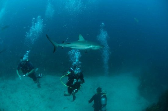 Ocean Explorers Dive Center: Diving with the Sharks