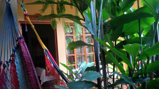 Comedor Mary & Hotel: View from hammock in courtyard