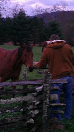 Dillard House: My husband feeding grass to one of the horses.