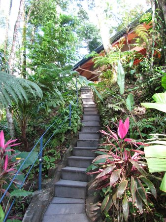 Prana Rainforest Retreat: Walk-way to breakfast at the main house.