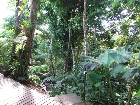 Prana Rainforest Retreat: We were surrounded by the Manuel Antonio National Park. Simply stunning.