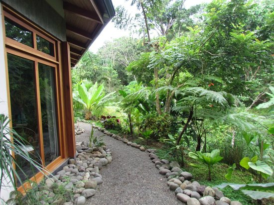 Prana Rainforest Retreat : Outside the room.