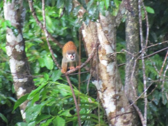 Prana Rainforest Retreat: One of the three different monkey species we saw on the grounds.