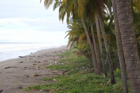 Clandestino Beach Resort : beach