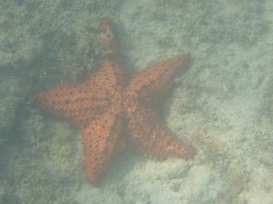 Cottages By The Sea : Sea star found on ocean floor