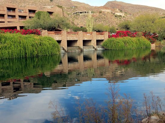 Canyon Cafe: Infinity Pool at Loews Ventana Canyon Resort