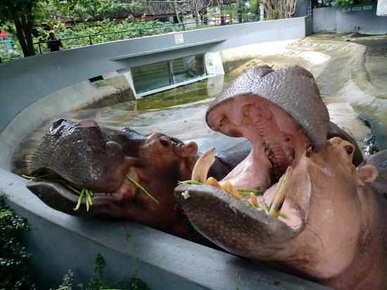 Dusit Zoo: Feeding time.