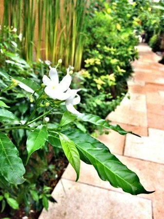 Amarterra Villas Bali Nusa Dua - MGallery Collection : walk way to the villa