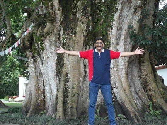 Gokarna Forest Resort : gokarna forest