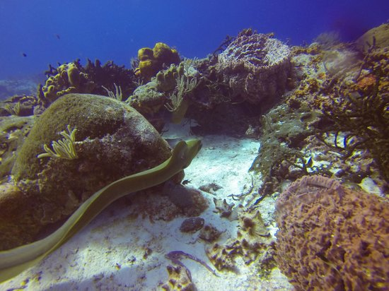 Gran Scuba Diving : San Francisco reef, Cozumel
