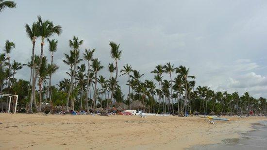 Sirenis Punta Cana Resort Casino & Aquagames: Пальмы в отеле