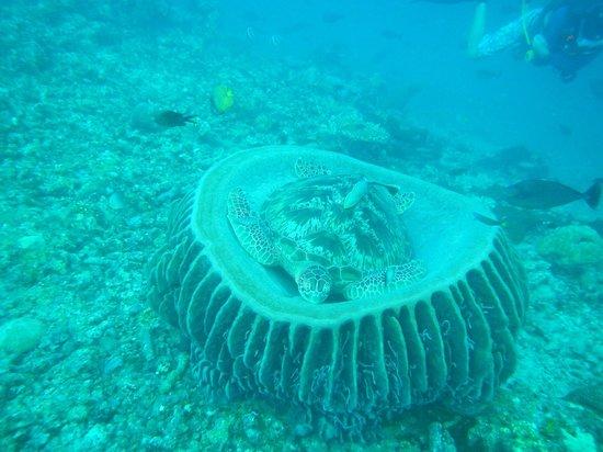 Manta Dive Gili Air Resort: Hans Reef