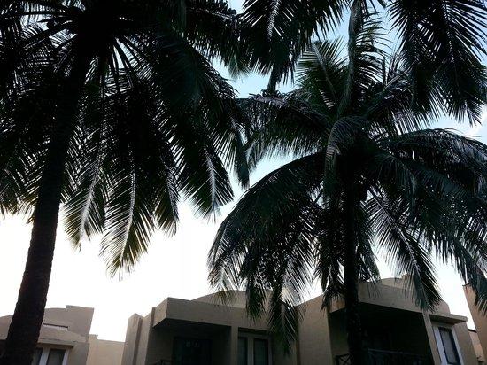 Whispering Palms Beach Resort: Lawns