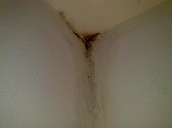 Hotel Mandji : mold in room