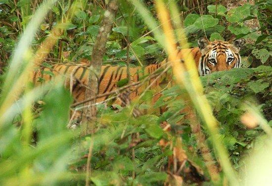Rhino Lodge and Hotel: Tiger during the jeepsafari