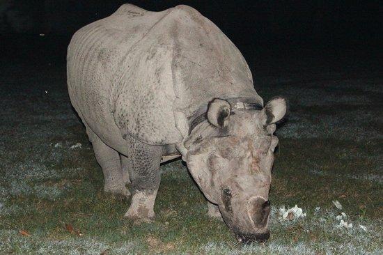 Rhino Lodge and Hotel: Rhino visiting the hotel