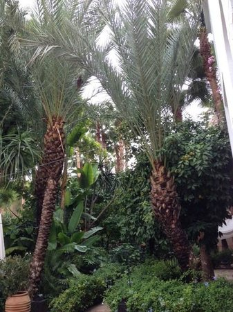 Les Jardins de la Medina: The palm trees
