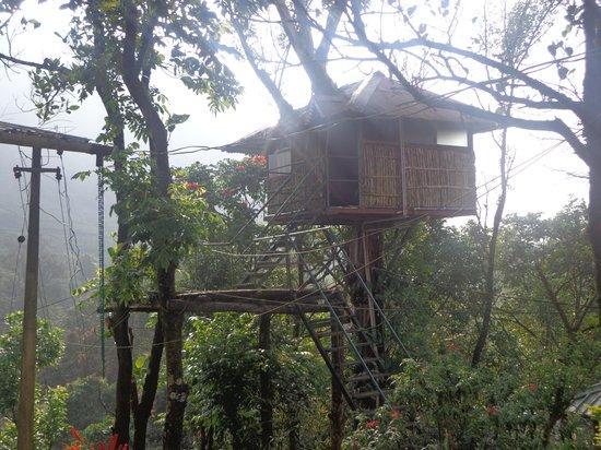 Wild Elephant Eco Friendly Resort: Wood Tree house