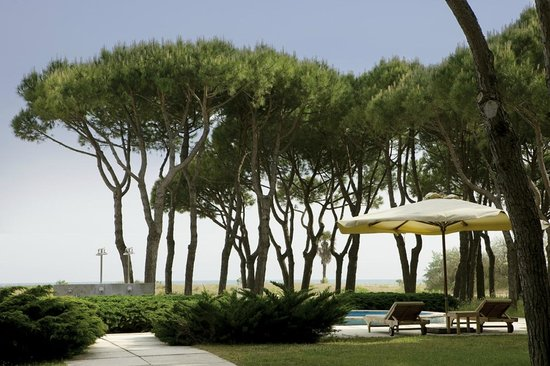 Hotel Bellevue & Resort : La pineta