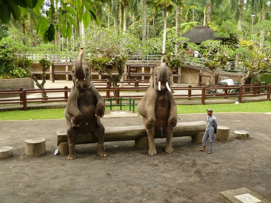 Tegalalang, Indonesia: Elephant Show