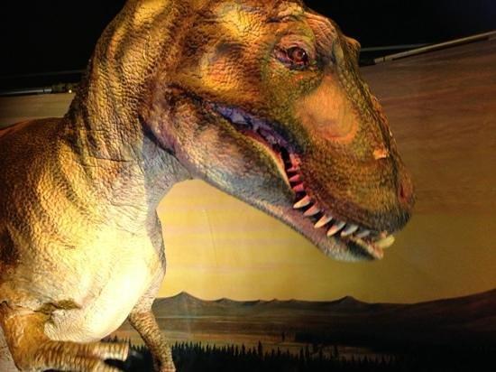 Museum of Tropical Queensland: t rex