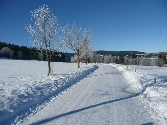 Bio & Wellnesshotel Alpenblick : Winterwanderung im Schwarzwald