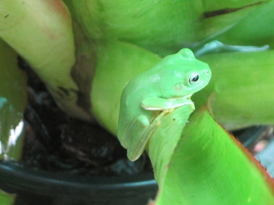 Bromeliad Bed and Breakfast: Our garden is frog friendly