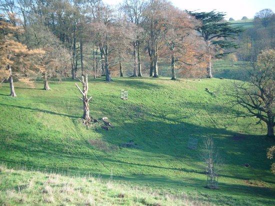 Dyrham Park: Dyrham Autumn trees