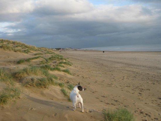The Gallivant: The fabulous Dunes