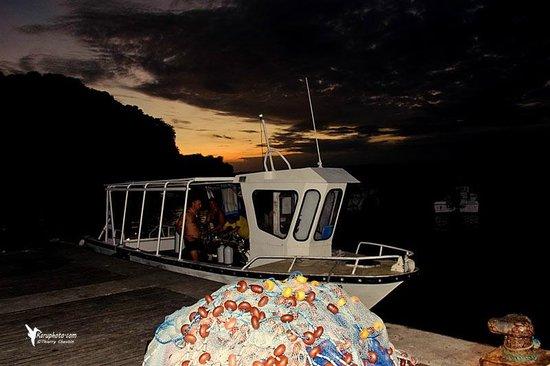 Tropicalsub Diving : le snook en plongée de nuit