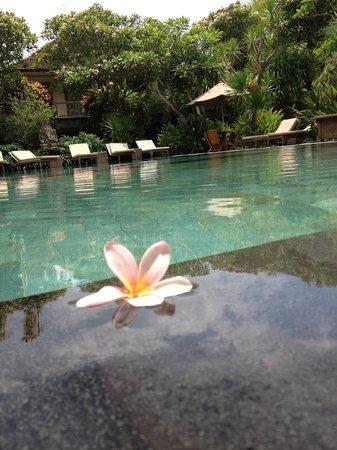 Sri Ratih Cottages: Pool Area
