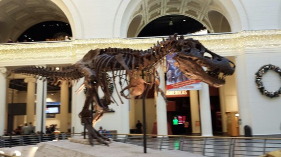 The Field Museum : Sue is in good hands....