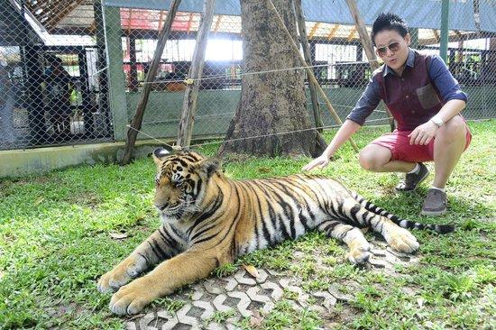 Inn Patong Beach Hotel Phuket: Tiger Kingdom
