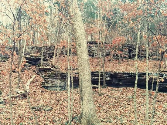 Red Bud Manor : Everywhere- Limestone formations and woods