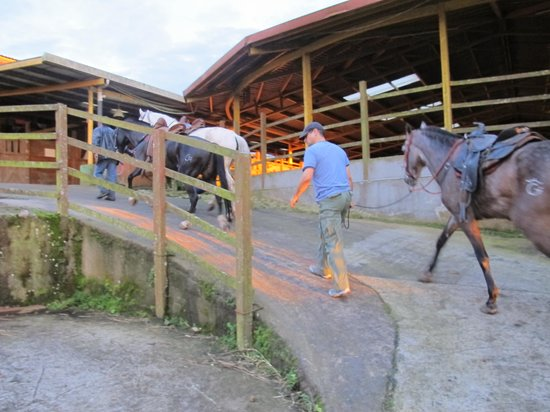 Toucan Rescue Ranch : We went Horseback Riding